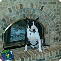 Adopt A Pet :: Gypsy-St. Louis, MO - Glenwood, AR