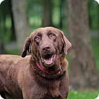 Adopt A Pet :: Fudge - Lewisville, IN