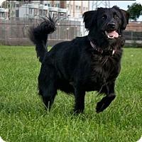 Adopt A Pet :: Kip - Indian Trail, NC