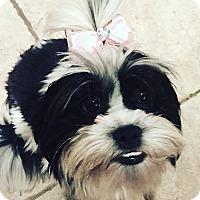 Adopt A Pet :: JOLIE MAE - Mission Viejo, CA