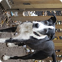 Adopt A Pet :: Lucy - Baden, PA
