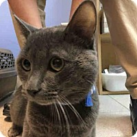 Adopt A Pet :: CARTER - Canfield, OH