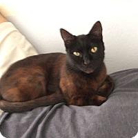 Adopt A Pet :: Tabitha - Tampa, FL