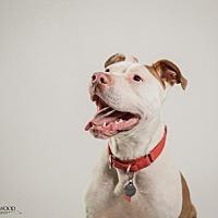 Adopt A Pet :: Raanan (RonRon) - St. Louis, MO