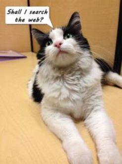 Domestic Longhair/Domestic Shorthair Mix Cat for adoption in Chandler, Arizona - Siri