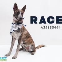 Adopt A Pet :: kennel 115 7-11-2017 - San Angelo, TX