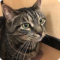 Adopt A Pet :: Tommy - Taylor, MI