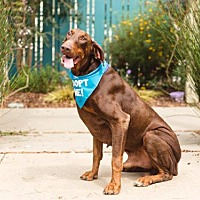 Adopt A Pet :: Arroyo - Pacific Grove, CA