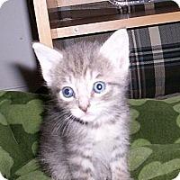 Adopt A Pet :: Olivia - Orlando, FL