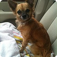 Adopt A Pet :: Max - Davie, FL