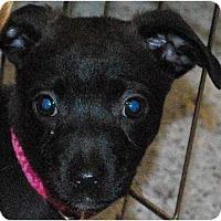 Adopt A Pet :: Zoey - Oceanside, CA
