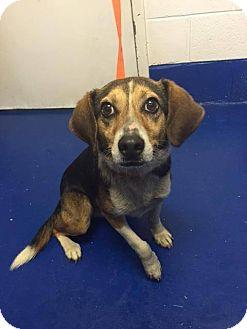 Beagle Mix Dog for adoption in New Kent, Virginia - Oliver