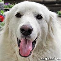 Adopt A Pet :: Keeva in MA - Beacon, NY