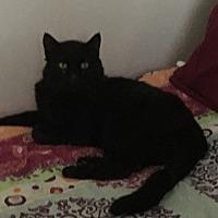 Adopt A Pet :: Charlie - Cerritos, CA