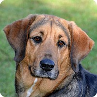 Adopt A Pet :: Macie - Englewood, FL