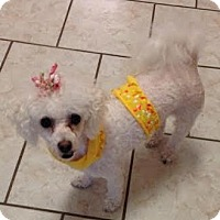 Adopt A Pet :: Yeppy: sweet quiet girl (PA) - Seymour, CT
