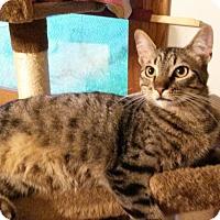 Adopt A Pet :: Comet - Des Moines, IA