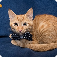 Adopt A Pet :: Tuna - San Juan Capistrano, CA