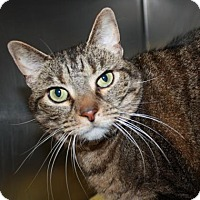 Adopt A Pet :: Dee Dee - Richmond, VA