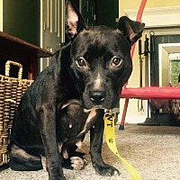 Adopt A Pet :: Olive - Shelburne, VT
