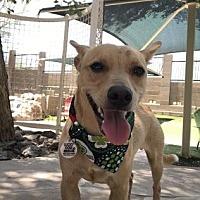 Adopt A Pet :: Mitch - Scottsdale, AZ