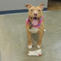 Adopt A Pet :: Joyce - Quincy, IL