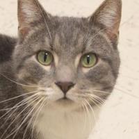 Adopt A Pet :: Micah - Dodgeville, WI