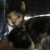 Adopt A Pet :: MAMACITA - St. Thomas, VI
