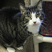 Adopt A Pet :: Polly - New Richmond,, WI