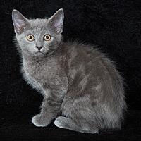 Adopt A Pet :: Lenore - Nashville, TN