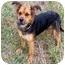 Photo 1 - Shepherd (Unknown Type) Mix Dog for adoption in Sullivan, Missouri - Penny