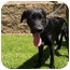 Photo 3 - Labrador Retriever Mix Dog for adoption in El Cajon, California - Sophie