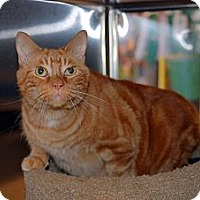 Adopt A Pet :: Milo - New Port Richey, FL