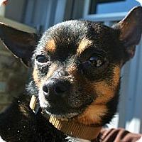 Adopt A Pet :: Sylvester - white settlment, TX