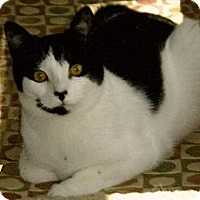 Adopt A Pet :: Libby - Medway, MA