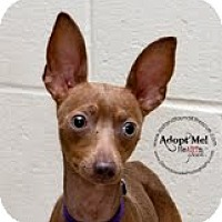 Adopt A Pet :: Batman~Adopted - Troy, OH