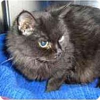 Adopt A Pet :: Nudge - Strathmore, AB