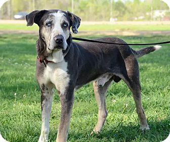 Labrador Retriever Mix Dog for adoption in Groton, Massachusetts - Max