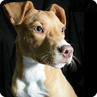 Adopt A Pet :: Neo - Lufkin, TX