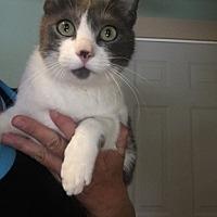 Adopt A Pet :: Sophie - Temecula, CA