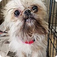 Adopt A Pet :: Elisa & Vinnie - Ahoskie, NC