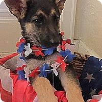 Adopt A Pet :: Savannah-Adopted! - Detroit, MI