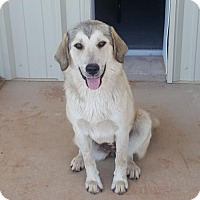 Adopt A Pet :: Susan - Weatherford, OK