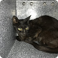 Adopt A Pet :: Sasha - Henderson, NC