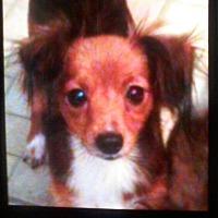 Adopt A Pet :: Sissy Newberry - Providence, RI