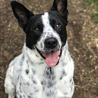 Adopt A Pet :: Cooper - Shelbyville, KY