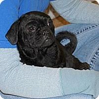 Adopt A Pet :: Amy - Minneola, FL