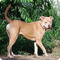 Adopt A Pet :: Skyler - Minneola, FL