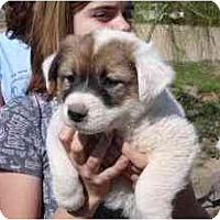 Adopt A Pet :: Jingo *Adopted* - Phoenix, AZ