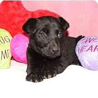 Adopt A Pet :: Daisy Duke - Glastonbury, CT